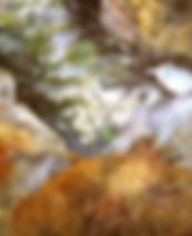 Gorge at Evans Notch.jpg