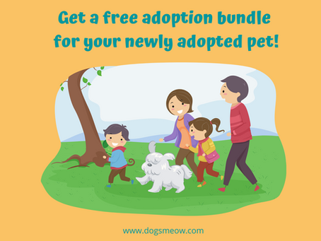 Adoption Bundle