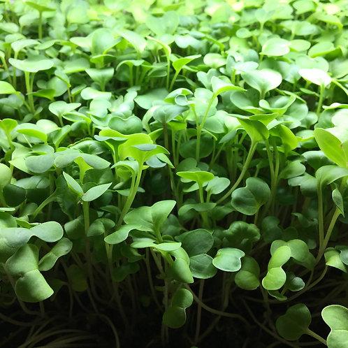 Micro-Broccoli (2 oz.)