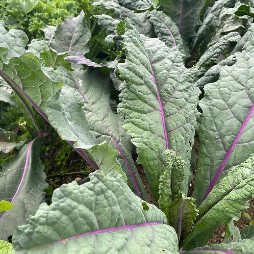 Kale (Lacinato Mix)