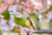 野鳥_edited.png