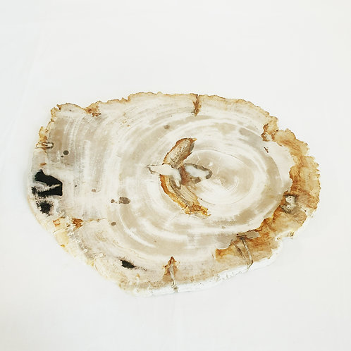 Petrified wood board