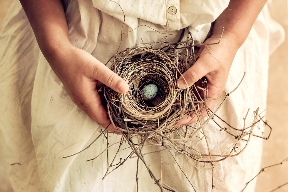 Nest Narcissistic Abuse Recovery Center