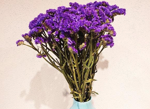 Strohblume lila