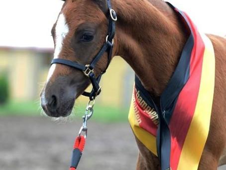 Next Generation becomes winner of the German Foal Championships in Lienen