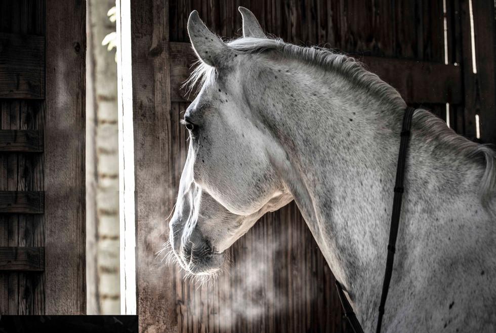 Filtgen _Horsewhisperer-1.jpg
