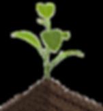 עסק בצמיחה - MVP Business