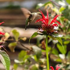 Plant-photos-15.jpg