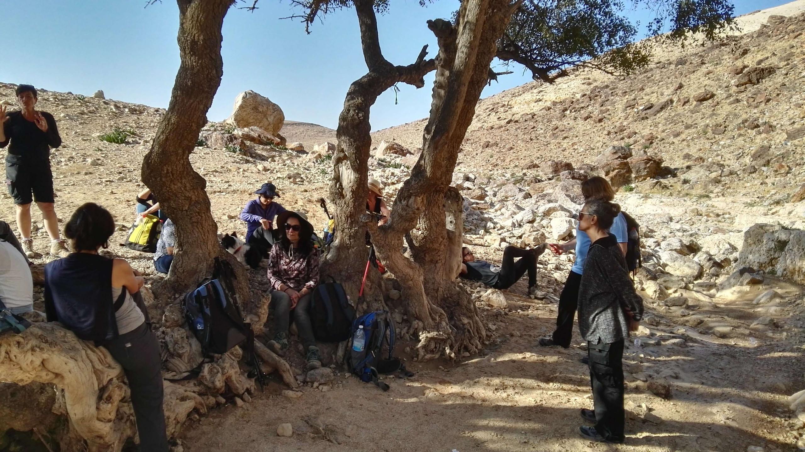 מאירות שביל ישראל תחת עץ השיזף בנחל קינה