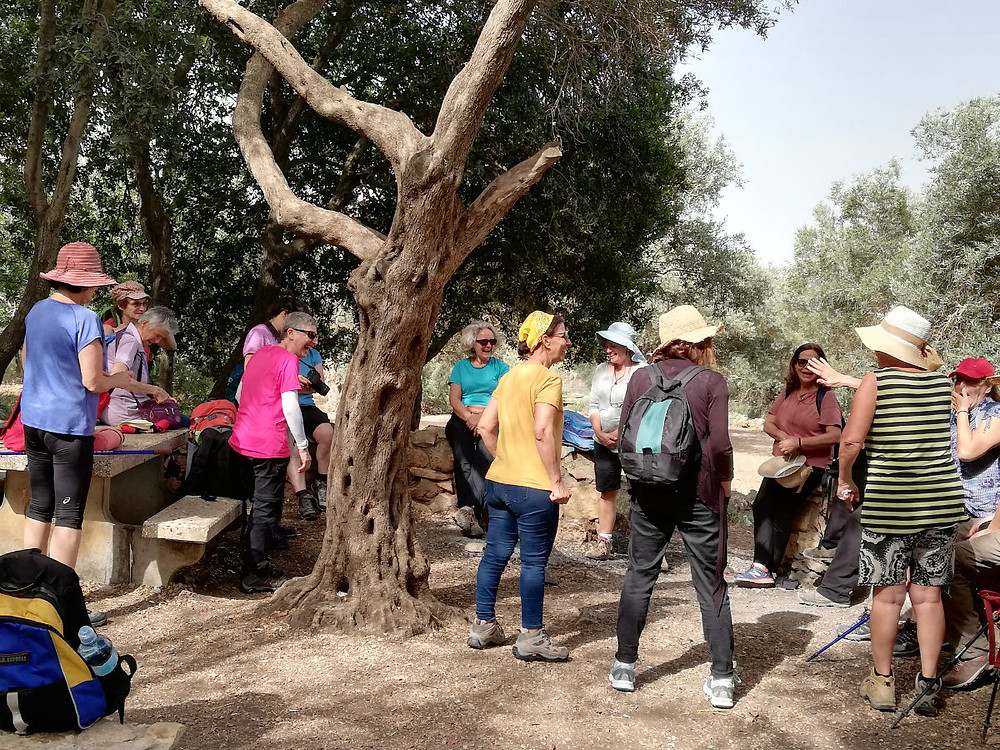 מאירות שביל ישראל בחניון הזיתים