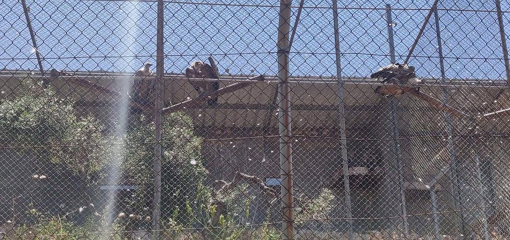 מאירות שביל ישראל חולפות ליד כלוב הנשירים ברמת הנדיב
