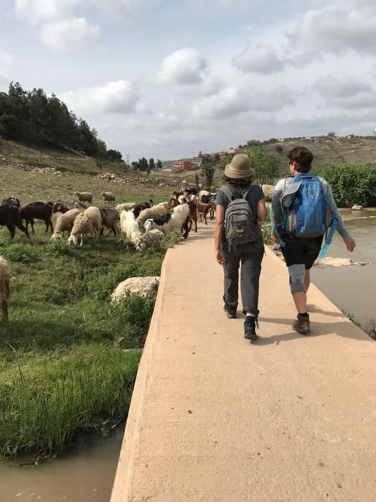 מאירות שביל ישראל בטיילת בטחנת הנזירים בנחל ציפורי