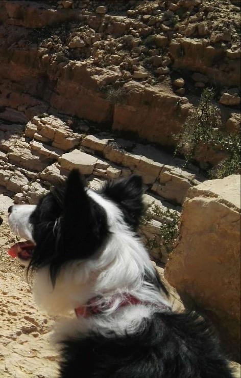 צ'יקה הכלבה, מלווה את מאירות שביל ישראל