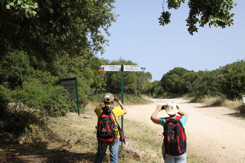מאירות שביל ישראל מסלול 28 בחורש הכרמל מעוספיא ליגור שביל המעפילים