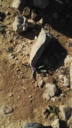 מאירות שביל ישראל מסלול 15