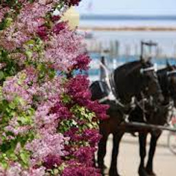 2022 Mackinac Island Lilac Festival June 6-10, 2022, 5 days $999.00 per person double (1)