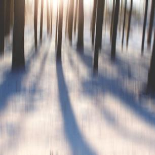 finland winter woods 2-2.jpg