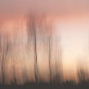 birch blur.jpg