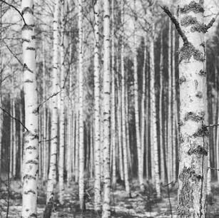 jani birch.jpg