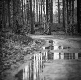 forest reflections-2.jpg