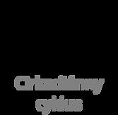 circadiann rythm button icon