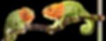 chameleonss-web-chameleoni_small.png