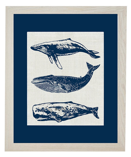 GROUP OF WHALES (Navy Mat)