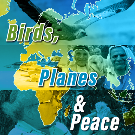 Birds Planes _ Peace_square_thumb.png