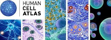 Human Cell Atlas - Single Cells