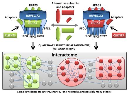 Alternative PAQosomes and adaptors