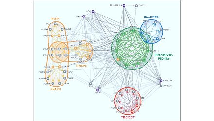 Interactions between the RPAP3/R2TP/PFD-like complex, nuclear RNA polymerases, HSP proteins, the TRiC/CCT and GimC/PFD complexes and RNA Polymerase Associated Proteins RPAP2 and RPAP4/XAB1/GPN1