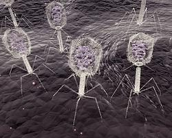 Bacteriophage Viruses
