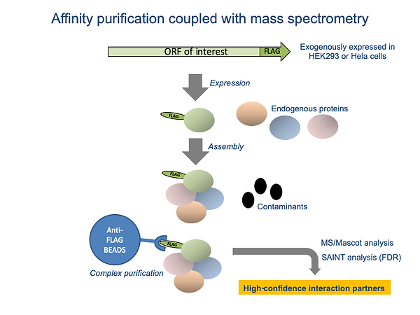 Affinity purification coupled with mass spectrometry