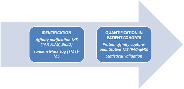 Biomarker Pipeline Overview - Identification of biomarkers and Quantification in patient cohorts