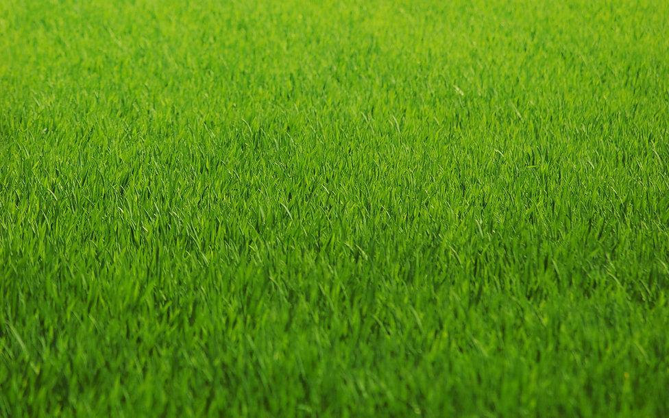 zelenaya-trava.jpg