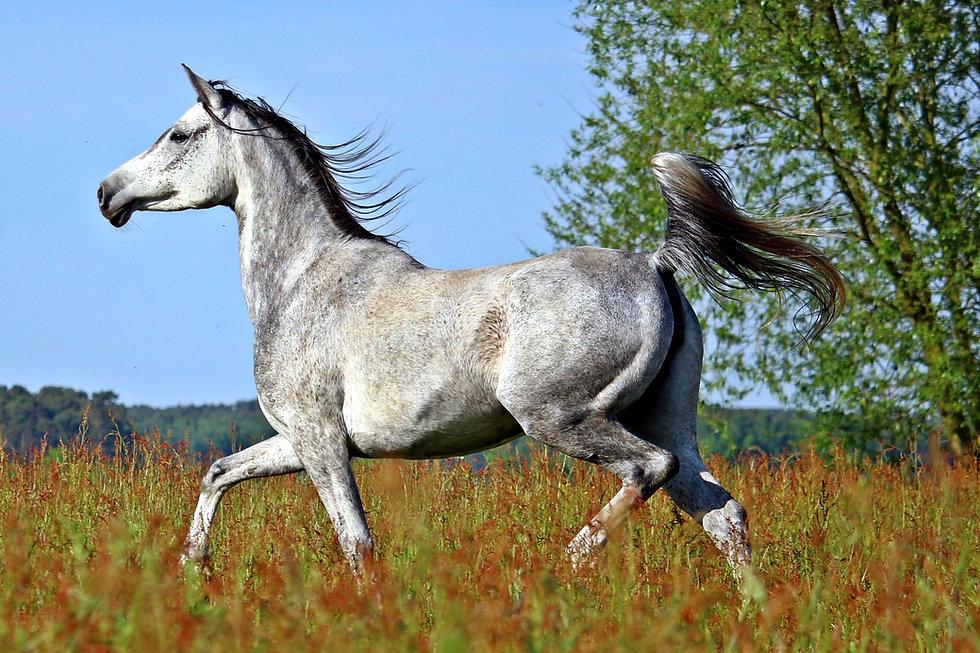 horse-2348766_1920.jpg