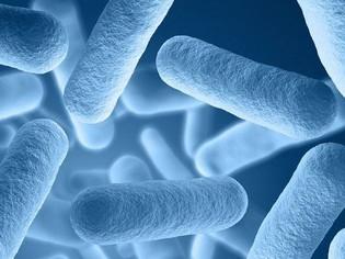 Qu'est-ce que le microbiote ?