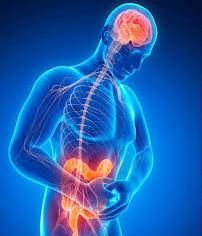 Les malabsorptions alimentaires et le syndrome de l'intestin ou du côlon irritable