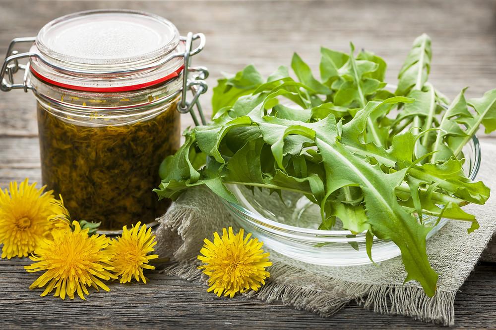 Foraged edible dandelions flowers and greens with jar of dandelion preserve.jpg
