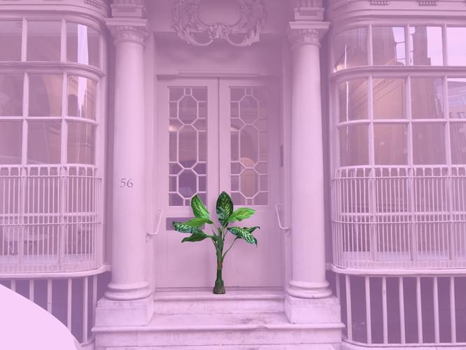 MOKU HQ Palm Pink (1).jpg