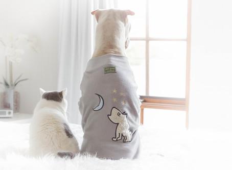 Post COVID-19 Pet Habits