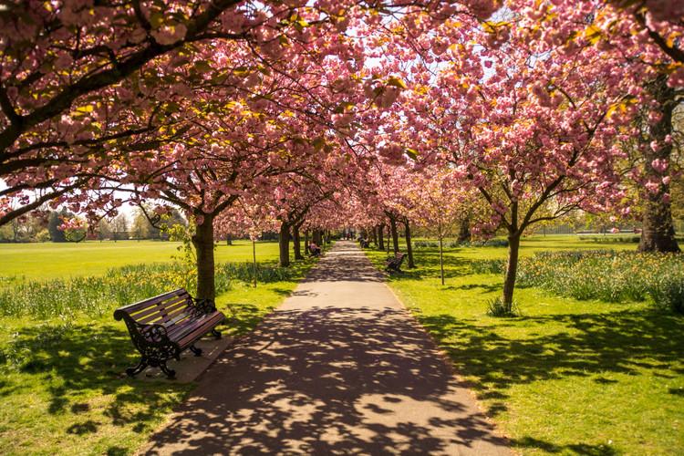 Greenwich Park. London, England