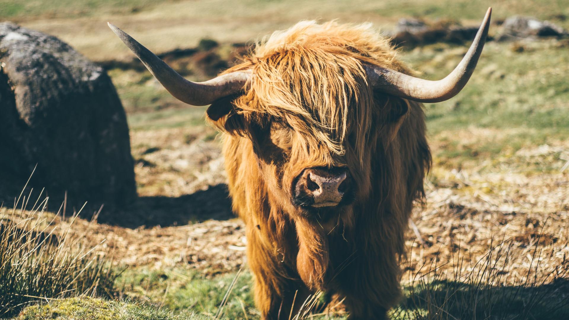 Highlands, Scotland.