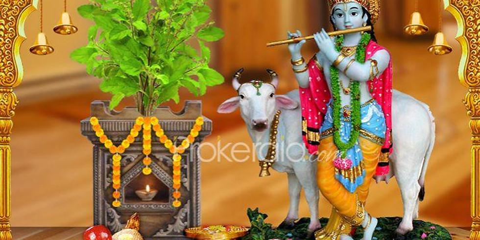 Tulasi Pooja & Tulasi Vivah
