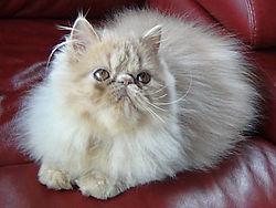 Cat free of ringworm