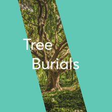"""With an aging population and a lack of space for burials, Japanese Buddhists are pushing for """"tree burials"""" as a more eco-conscious way to limit humanity's impact on mother nature. The practice is also a more realistic consideration as it costs a less than other traditional burial practices and have been gaining popularity all around Japan.   Replacing the casket burial, families can first cremate the deceased body and then place the remains on the ground with a newly planted tree instead of using a traditional headstone. While not all families who partake identify as Buddhist, the practice reflects Japan's Buddhist culture of environmental responsibility.   IMPLICATIONS We're re-examining death as traditional burial practices such as lavish caskets and giant headstones become too costly, impractical and often unsustainable. Death is becoming simpler and more sustainable as we find new ways to honour those who have passed.  #DeathUndone #Frugalicious"""