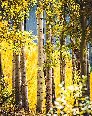 -©silkyshots2020-fall.webres--october 02