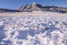 Winter Flatties