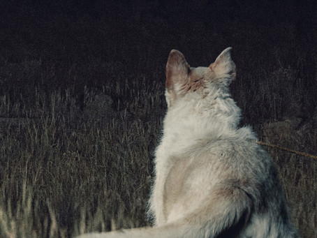 Review: It Comes at Night