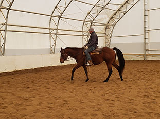 veto under saddle.jpg